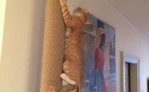 Когтеточка для кошки от пола до потолка